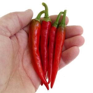 Ring of Fire chilli paprička