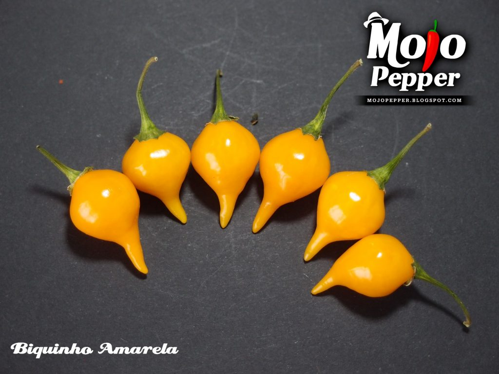 Biquinho Amarela chilli