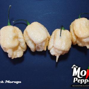 Peach Moruga - semínka